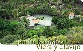 Plantamer las palmas de gran canaria jard n bot nico viera y clavijo - Jardin botanico las palmas ...