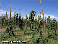 Hop farm near Windsor