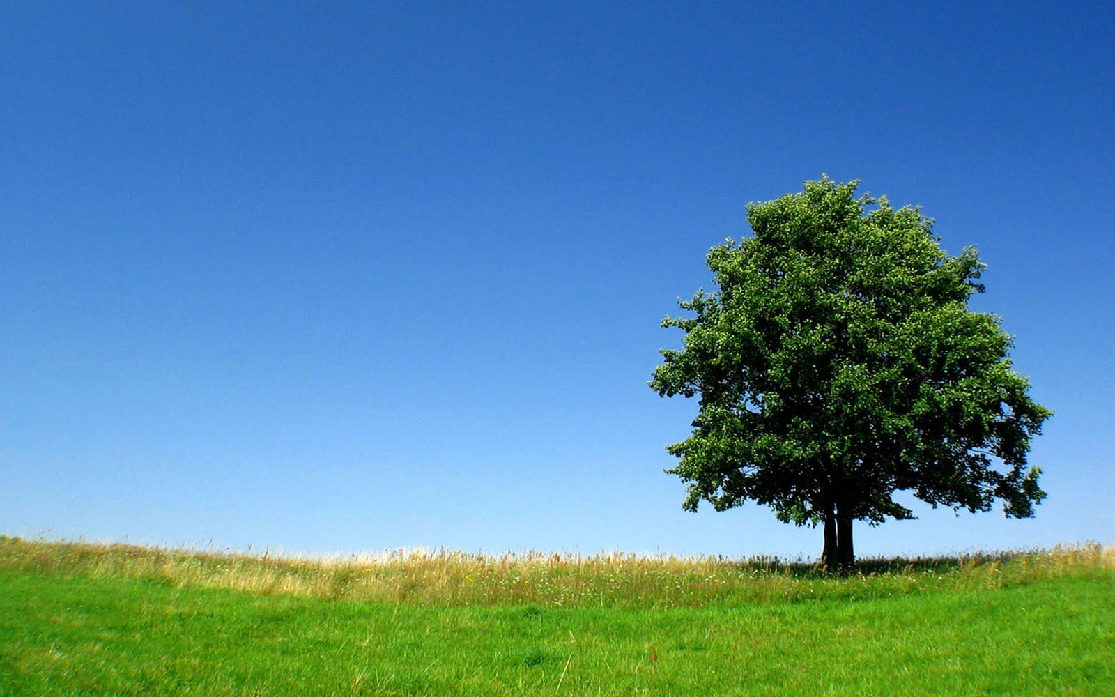 Açıklama: ağaç resimleri hd doğa manzara wallpapers duvar