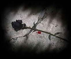 imagenes de rosas negras de luto Mejores Imágenes - Ramo De Rosas Negras Imagenes