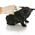 Diabetes In Dogs - Diabetes In Animals