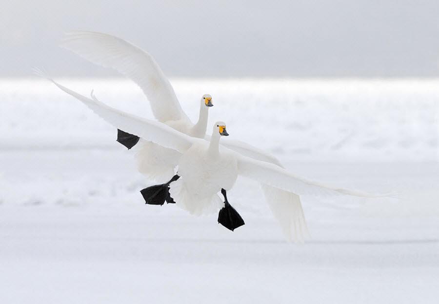 en g%C3%BCzel masa%C3%BCst%C3%BC resimler+%2846%29 2012 Yılının En Güzel Masaüstü Resimleri   Jenerik Fotoğraflar