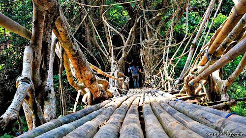 Jembatan Akar di Baduy Luar