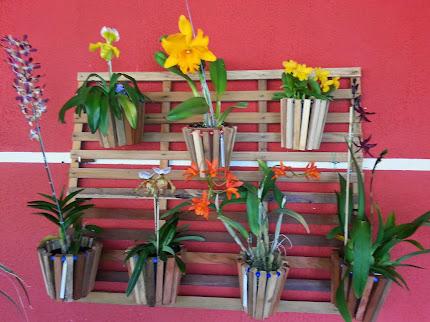 Floração mês de Julho...
