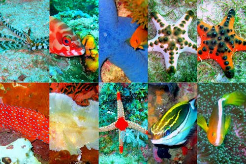 Viaje al fondo del mar II (peces, corales y arrecifes)