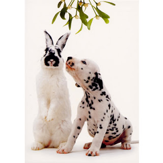 bunny rabbit and dalmation dog kissing under mistletoe