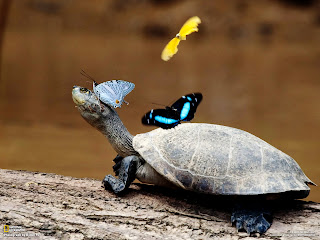Colorful Butterflies on Turtle Funny Animals HD Wallpaper