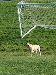 Stanley at Soccer Field