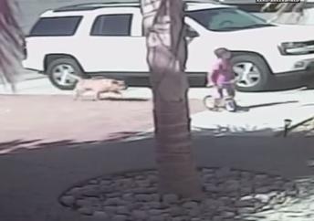 Gato Salva a un Niño de un Perro