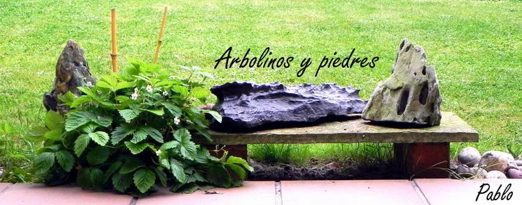 Arbolinos y piedres