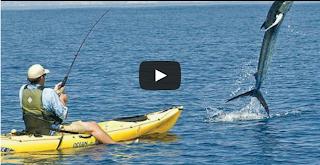 Kayak fishing Marlin