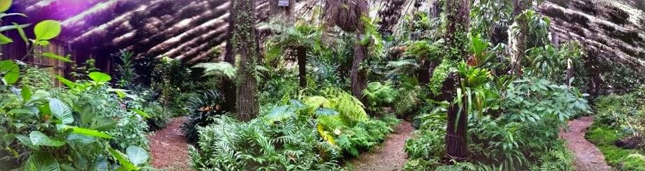 Simpson Shadehouse - Adelaide Botanic Gardens