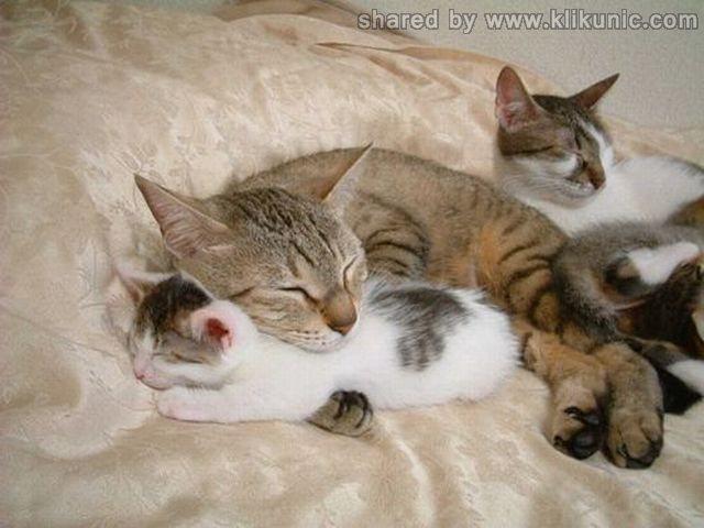 http://4.bp.blogspot.com/-jqZ_YUAhavk/TXhLTGb5dcI/AAAAAAAAQiQ/D9PYUNm6oAo/s1600/these_funny_animals_632_640_38.jpg