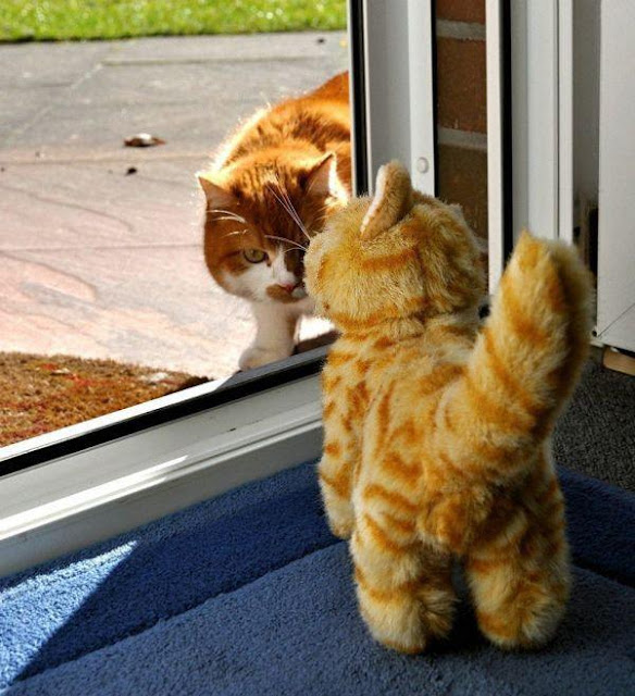 Gatos intruso