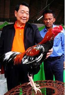 Adu ayam bangkok juara bersama milyuner