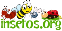 Tudo sobre insetos