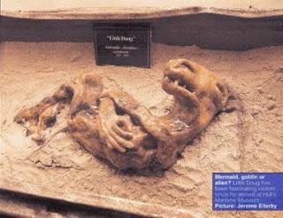 bintancenter.blogspot.com - Bangkai Misterius Yang Ada Di Museum Inggris