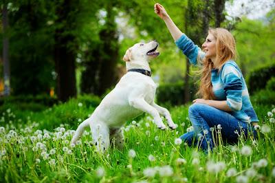 perros, animales, sentimientos, curiosidades,