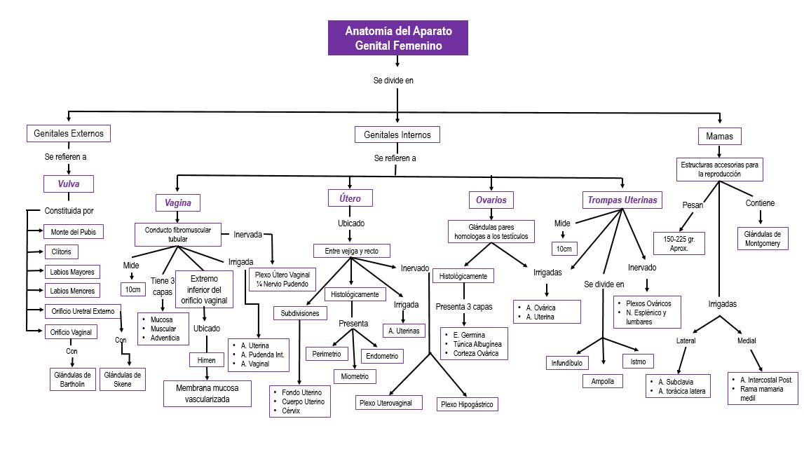 Ginecologia y Obstetricia: Anatomia del Aparato Genital Femenino