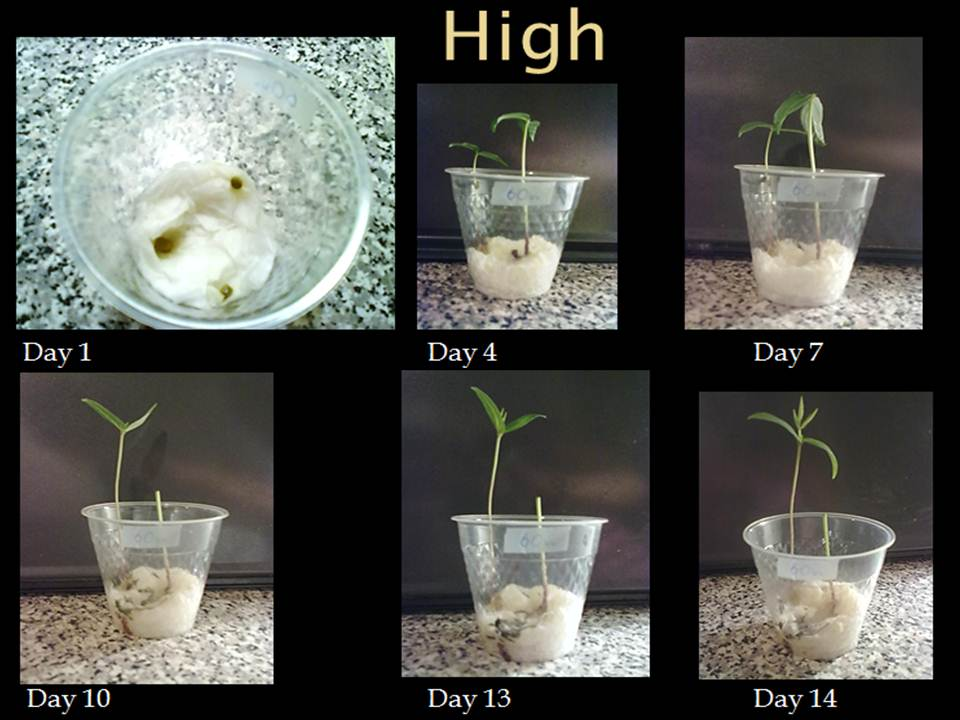 images bean plant experiment presentation sbi3u1 bean plant experiment ...