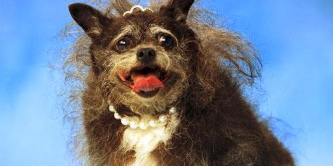 Anjing Paling Jelek