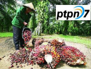 PT Perkebunan Nusantara VII (Persero)