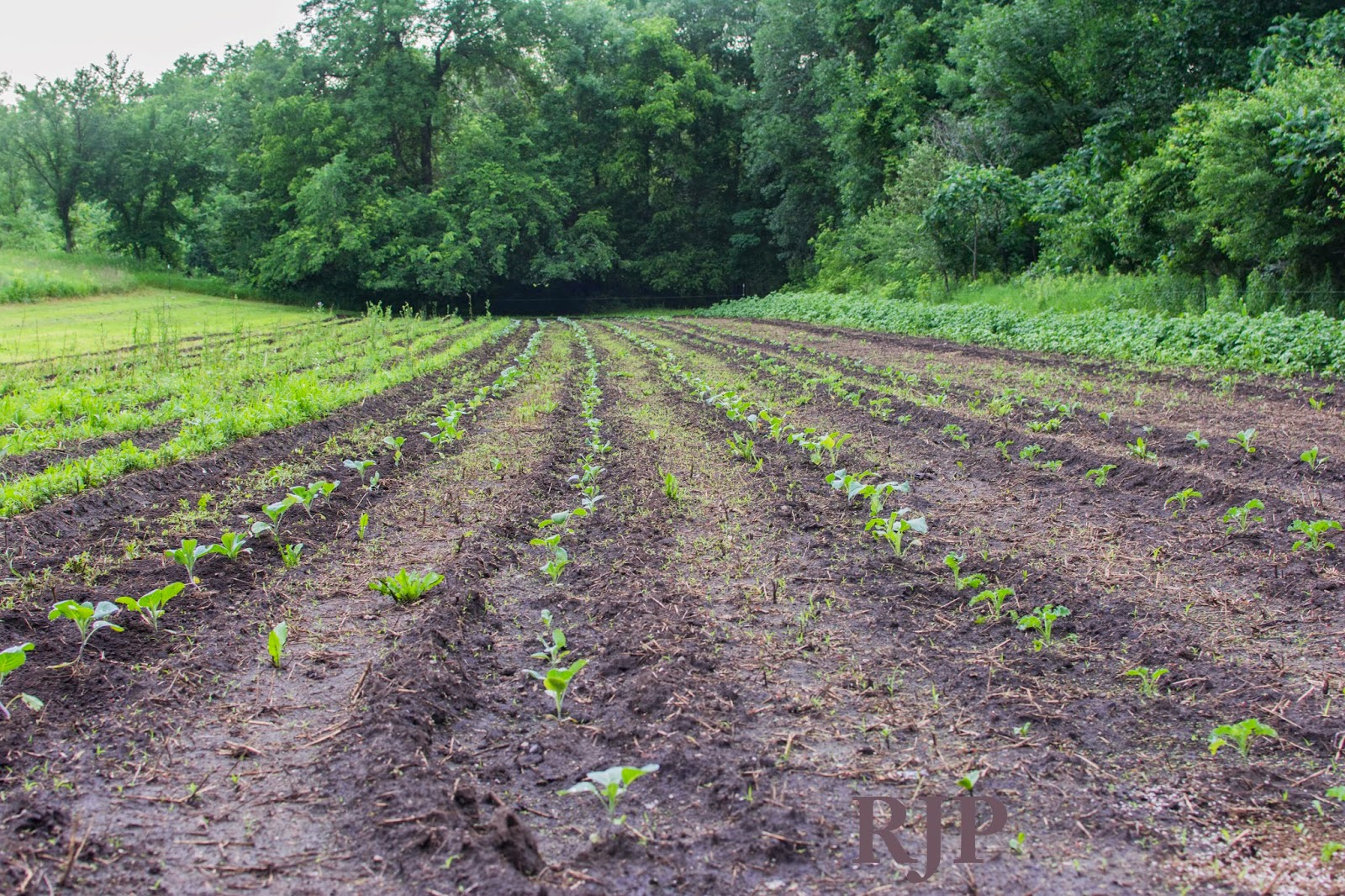 These Are The Plants We're Currently Planting On Our Fully Organic Farm Credit: RJP