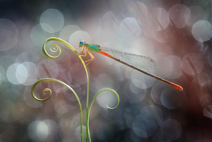 Nordin Seruyan, fotografía macro, insectos