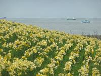 遅咲きのイエローゾンで貨物船が行き交う。