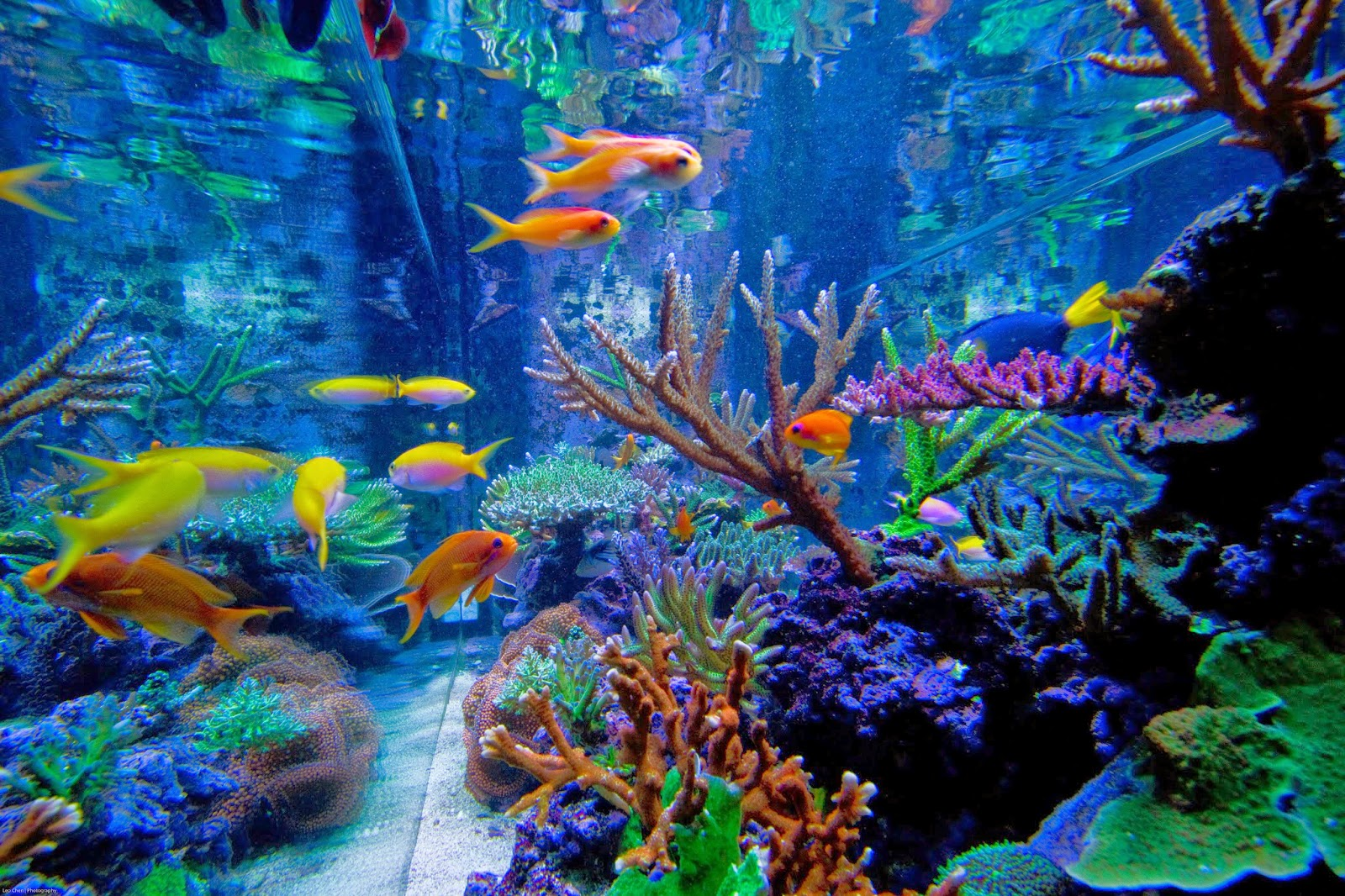 5 Ways To Change Your Aquarium Water Like A Pro Marine