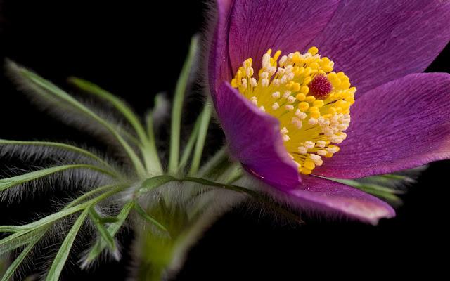 Flor Morada Hermosas Fotos de Flores - Imágenes de Flores en HD