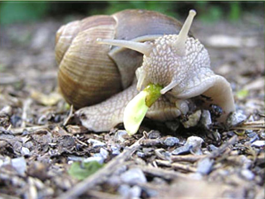 snail farming how to start