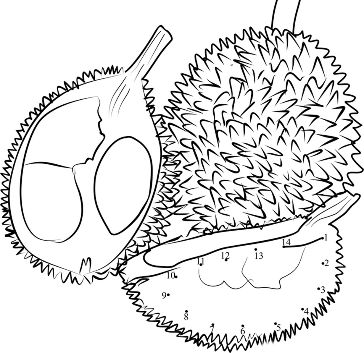 mewarnai gambar buah durian