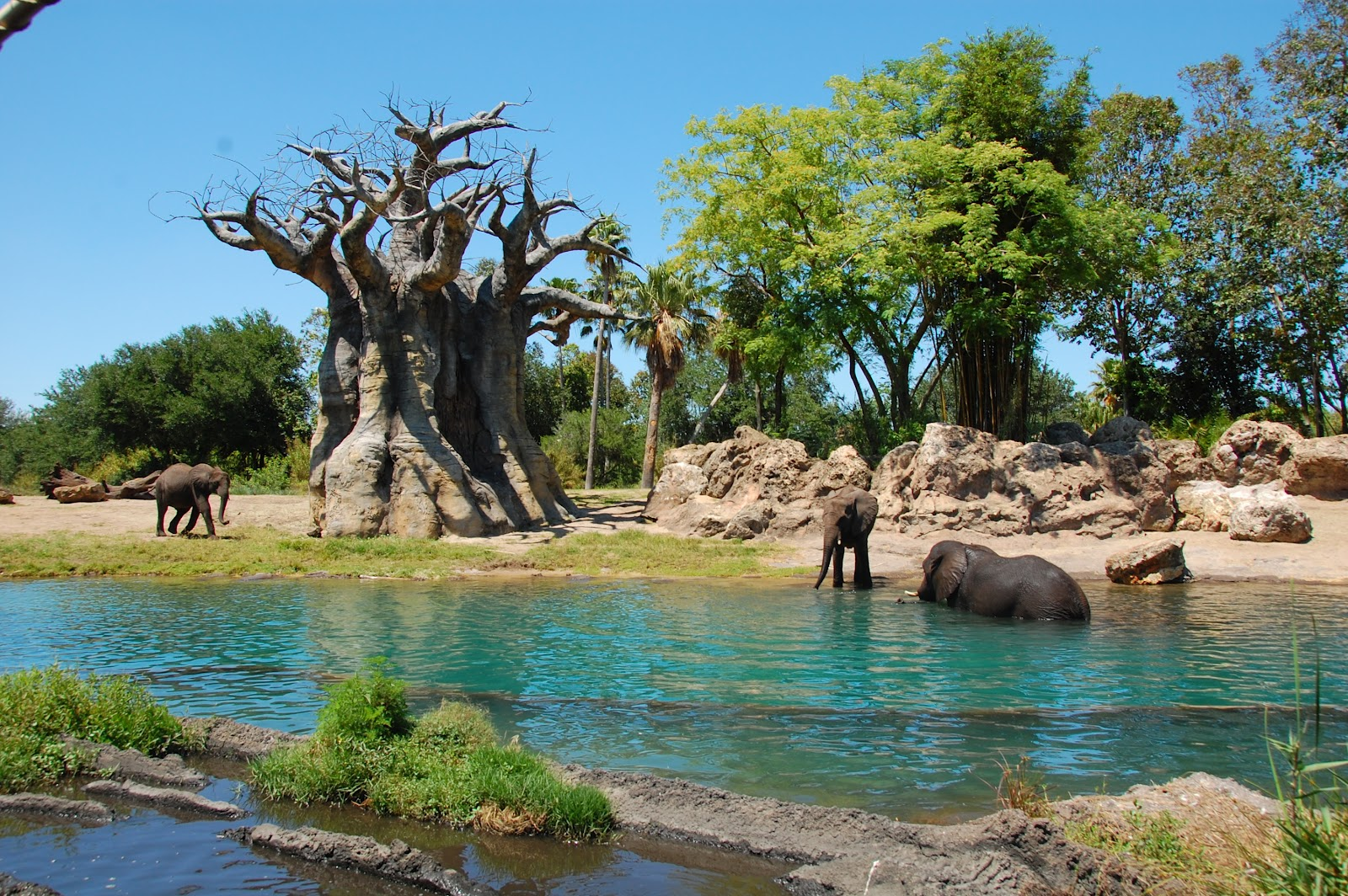 Image of: Walt Disney Elephants Taking Bath On Kilimanjaro Safari At Animal Kingdom Disney Sisters Disney Sisters Elephants Taking Bath On Kilimanjaro Safari At