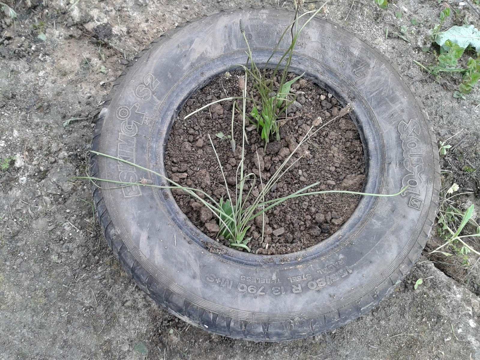 daily sustainable: How to reuse old tire/ Kako iskoristiti stare gume