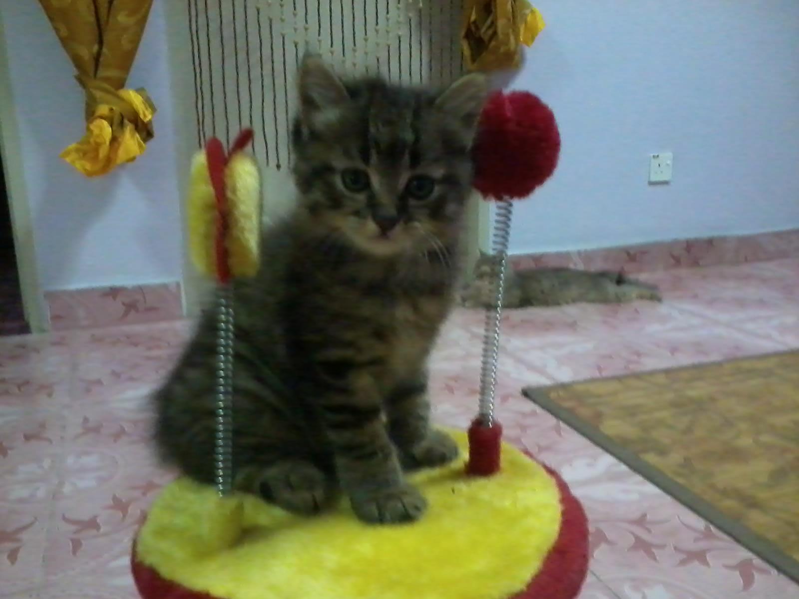 Foto Foto Kucing Cantik Kiriman Lieza Marcella Kucing Gue