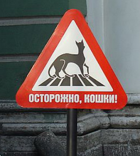 funny russian road sign warning sign watch out for cat