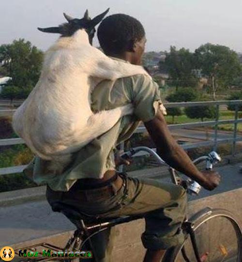Bicicleta para Animais