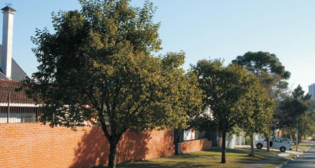 Escolhendo a árvore certa para plantar na sua rua