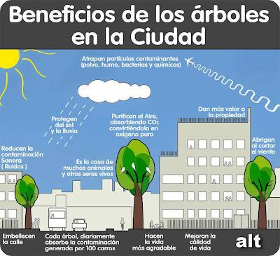 Infografía Beneficios de los árboles en la ciudad