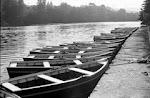 Vuelven las barcas al Ebro