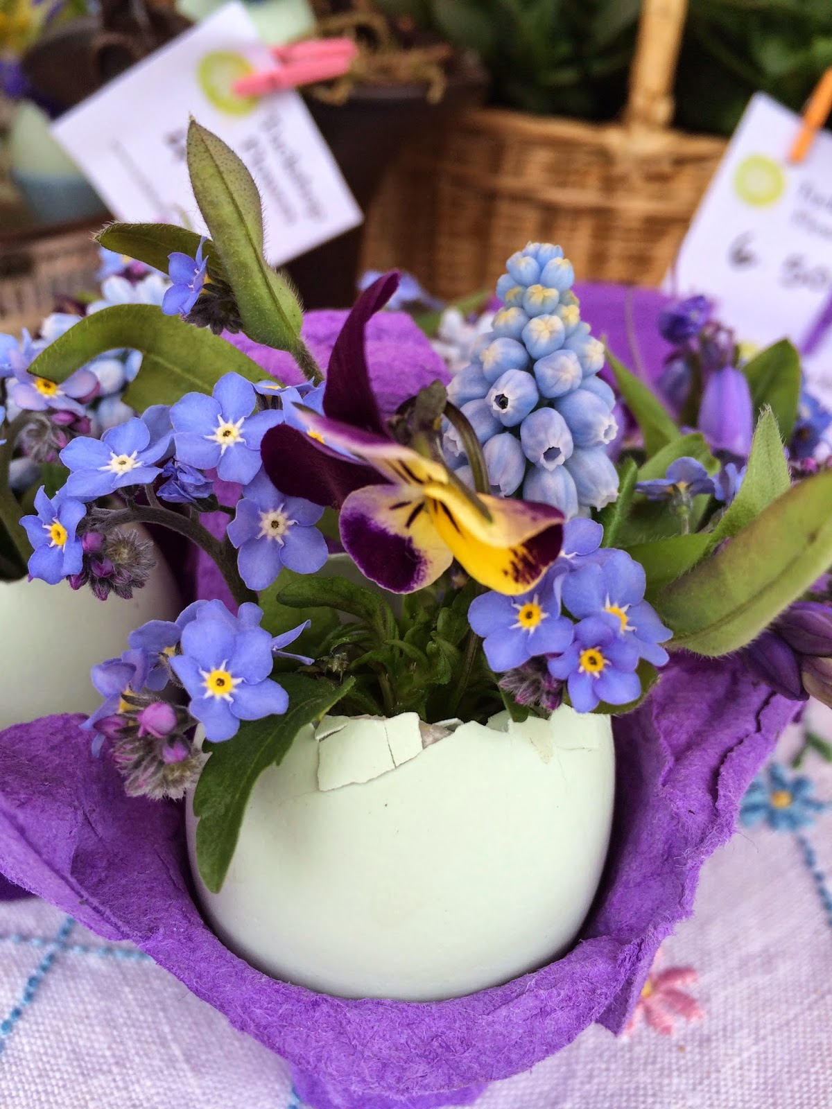 Cotswold legbarr blue shelled egg with forgetmenots, viola and grape hyacinths.
