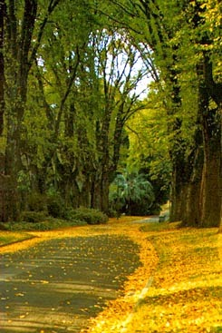 Autumn leaves in Fitzroy Gardens