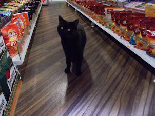 """A beautiful jet black cat at a """"Mini Market"""" store owned by Vietnamese Couple in Prague"""