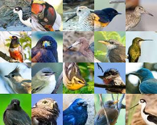 Por qué y cómo vuelan las aves
