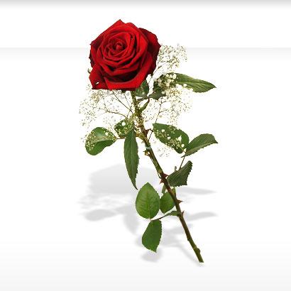 wallpaper of roses