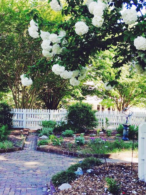 garden-hydrangeas