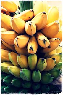 Budidaya pisang kepok