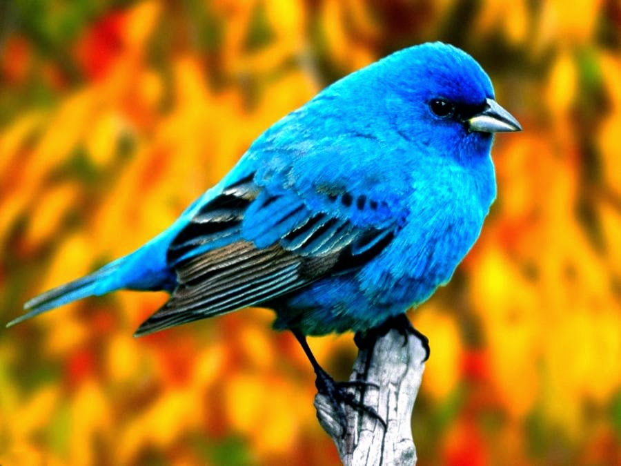 photograph of a blue bird