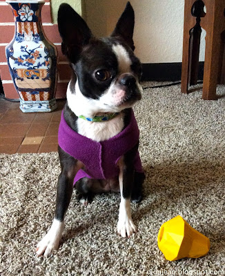 SInead with her BarkBox squash toy